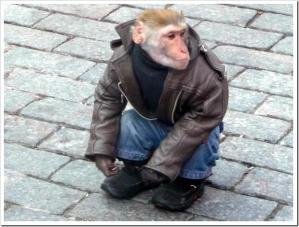 monkey-29959047731