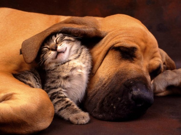 cat-and-dog-bestfriends-600x450