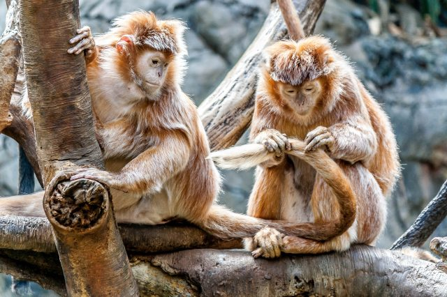 animal-ape-care-332153 (1)